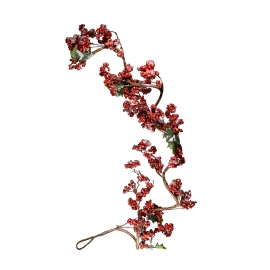Ashberry branch